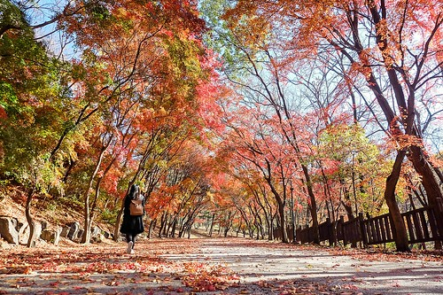 surreal_seoul_grand_park | by Sammdaysoon