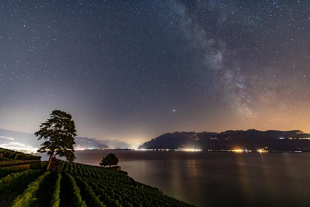 Les vignes et les étoiles     The vineyards and the stars