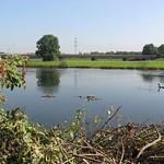 Nach dem Hochwasser ist die Vegetation am Ruhrufer in der Heisinger Ruhraue niedriger als zuvor