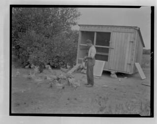 Poultry raising, Oromocto, New Brunswick / Élevage de volaille, Oromocto (Nouveau-Brunswick)