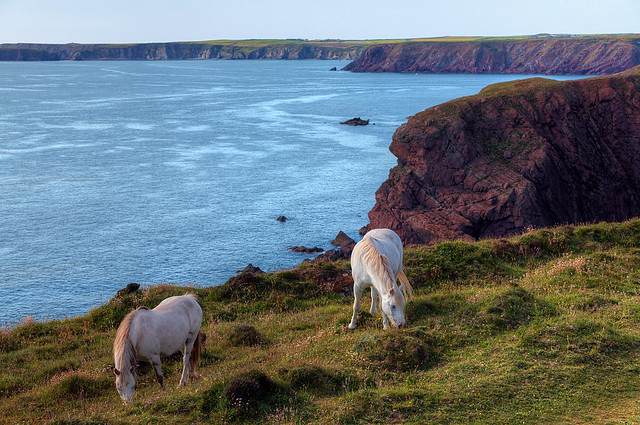 Blue Sea, Red Rocks and White Ponies