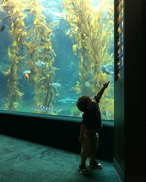 "Keep on swimming. Keep on swimming... Kid exploring @birchaquarium. I tried to recall lines from his ""Ocean Colors"" book. Green turtle watches fish in the sea. How many fish do you see? Alexander seemed more interested in kid/people watching. Either way,"