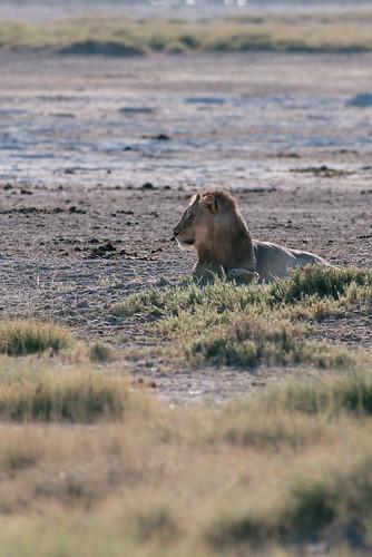 Namibia safari tour | by knipslog.de