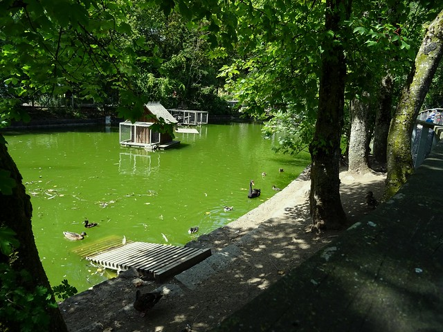 Duck pond in our town
