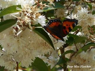 Farfalla (6) | by Dear Miss Fletcher