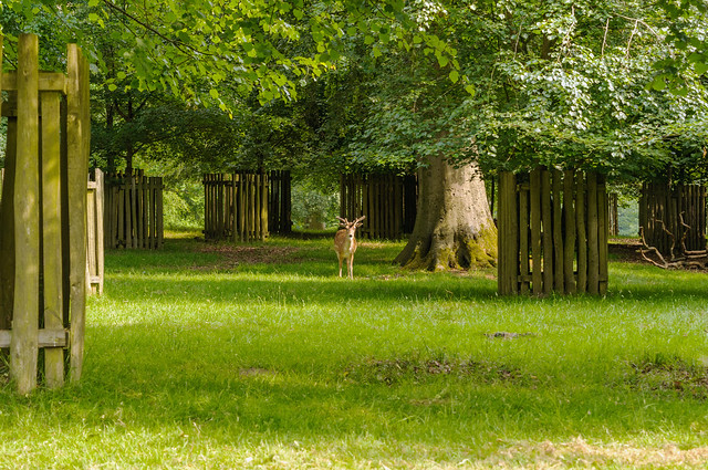 Deer park inhabitant