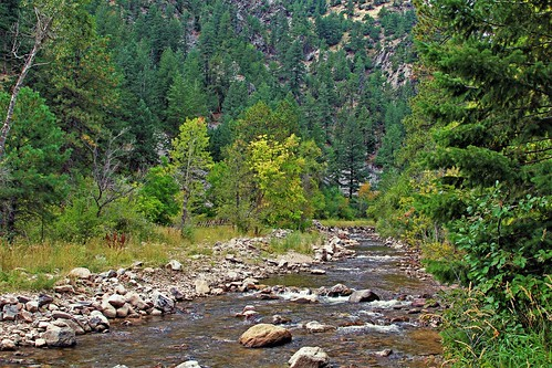 river creek boulder clearwater clean clear whitewater stream mountainstream mountain pine spruce fir southbouldercreek nature eldoradocanyonstatepark colorado jannagalski jannagal