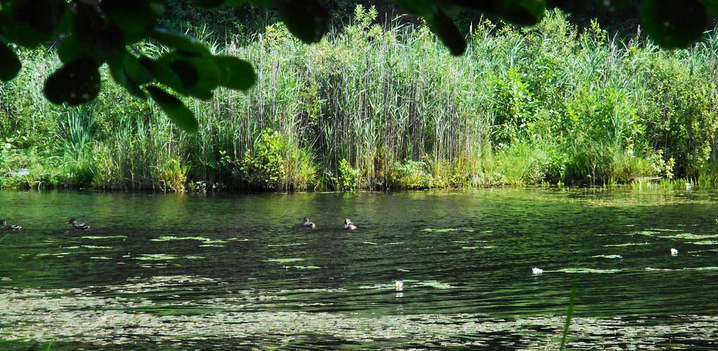 At the Balžis Lake 34