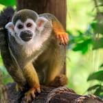 Skull Monkey -  Zoo Leipzig | VFBLN