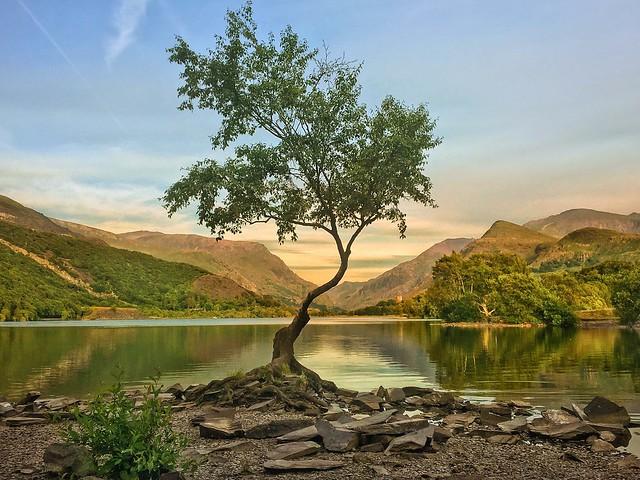 The Lone Tree of Llanberis