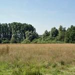 Blick über einen Teil der Heisinger Ruhraue