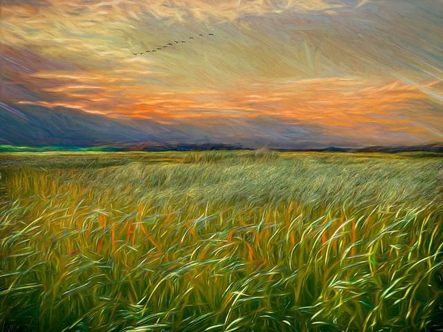 Salisbury Sunset