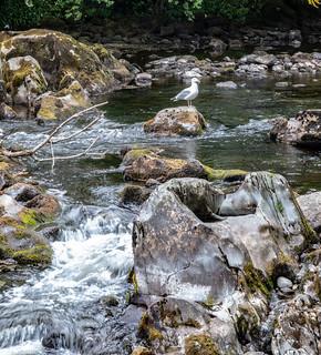 Afon (River) Llugwy, Betws-Y-Coed, Wales. UK.