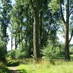 Bäume in der Heisinger Ruhraue