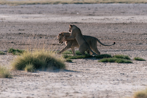 Namibia safari tour | by knipslog.de