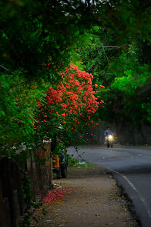 A morning walk among the flowers   by Nithi clicks