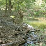 Große Mengen abgerissener Äste lagen nach dem Sommerhochwasser 2007 im Naturschutzgebiet Heisinger Ruhraue