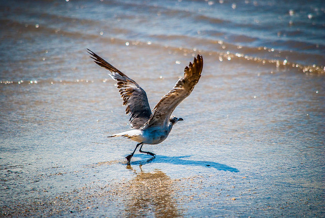 Taking Flight in the Surf
