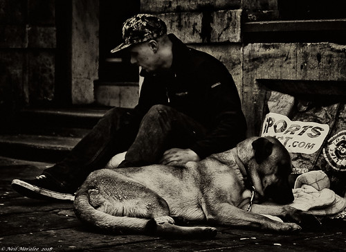 Its a dogs life. | by Neil. Moralee