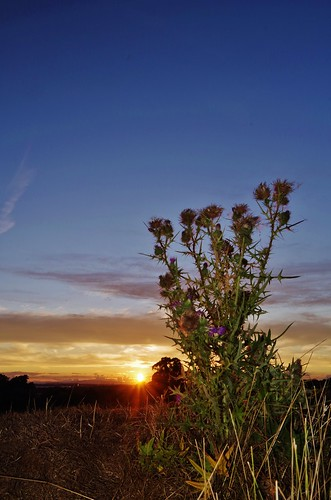 thistles sunset flash fields light plants weeds nature