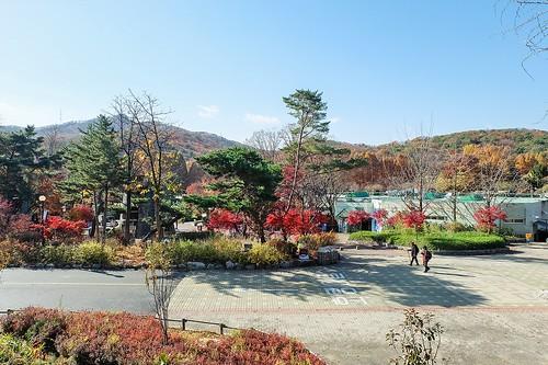 elder_walk_seoul_grand_park | by Sammdaysoon