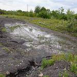 Kleine Wasserstellen am Rand des Gipfelplateaus ziehen viele Tiere an, darunter beispielsweise Flussregenpfeifer