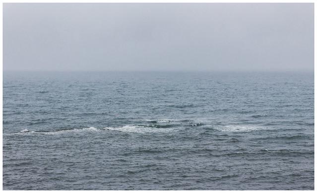 North Sea, Pittenweem