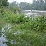 Überflutetes Ruhrufer in der Heisinger Ruhraue