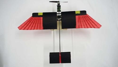 drone-ali-piumate-858878