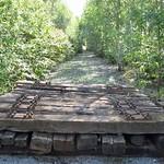 Gleisreste und eine Schneise zwischen jungen Birken im Gleispark Frintrop