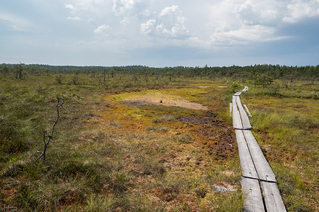 The giant bog (Finlande)