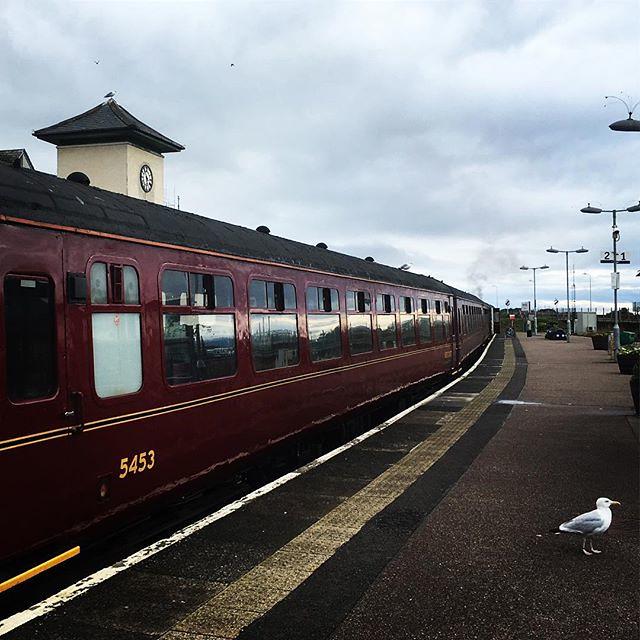 Waiting for a train #homewardbound #jacobitesteamtrain #seagullsareeverywhere #platform9¾ #hoghwartsexpress #scotland
