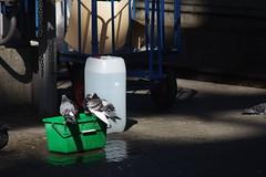 Frankfurt Hbf pigeon spa