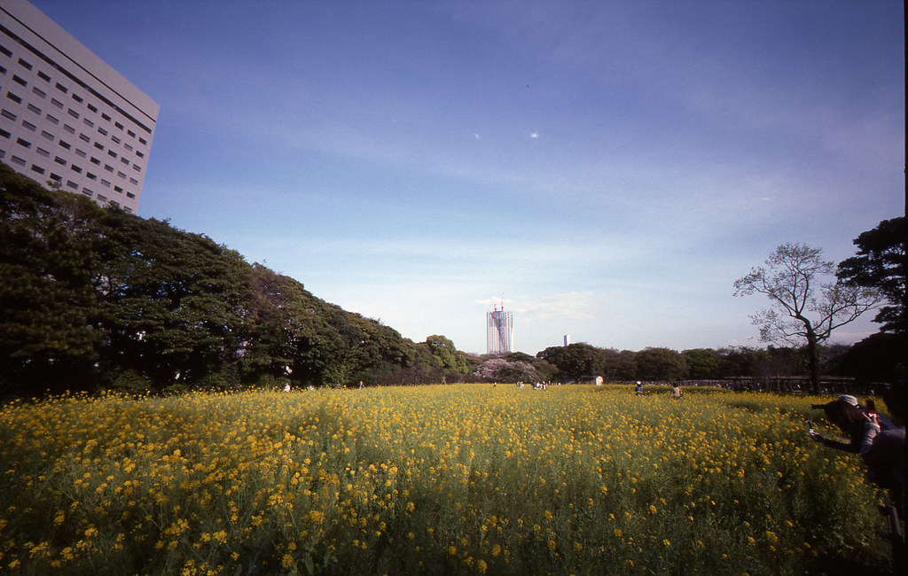 菜の花畑09