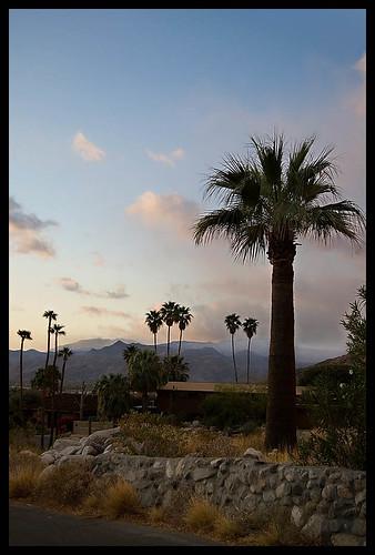 d50 palms landscape interestingness nikon palmsprings explore palmtrees socal southerncalifornia nikonstunninggallery is2gbworthofphotosfromsocalintwodaysalittletoomuch piesazh