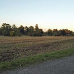 Im Spätsommer 2016 wurde die Vegetation kurz geschnitten, um eine Verbuschung des Areals zu vermeiden