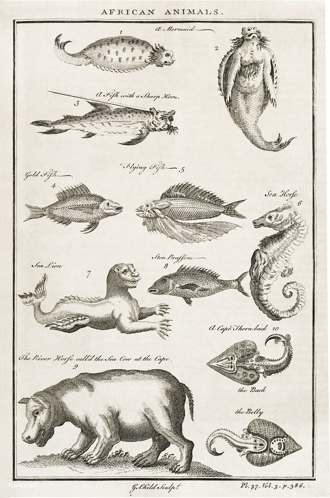 Vintage Illustration of fish and other African animals pub