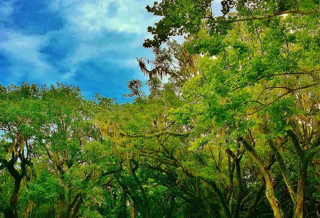 Paradise  (Series - Eden, Florida State Park)