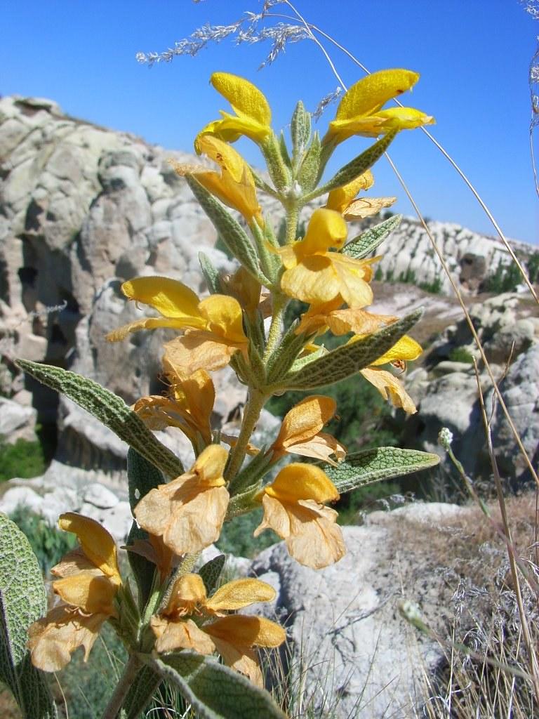 2008-06-25 tuin en uzengi 045(1)