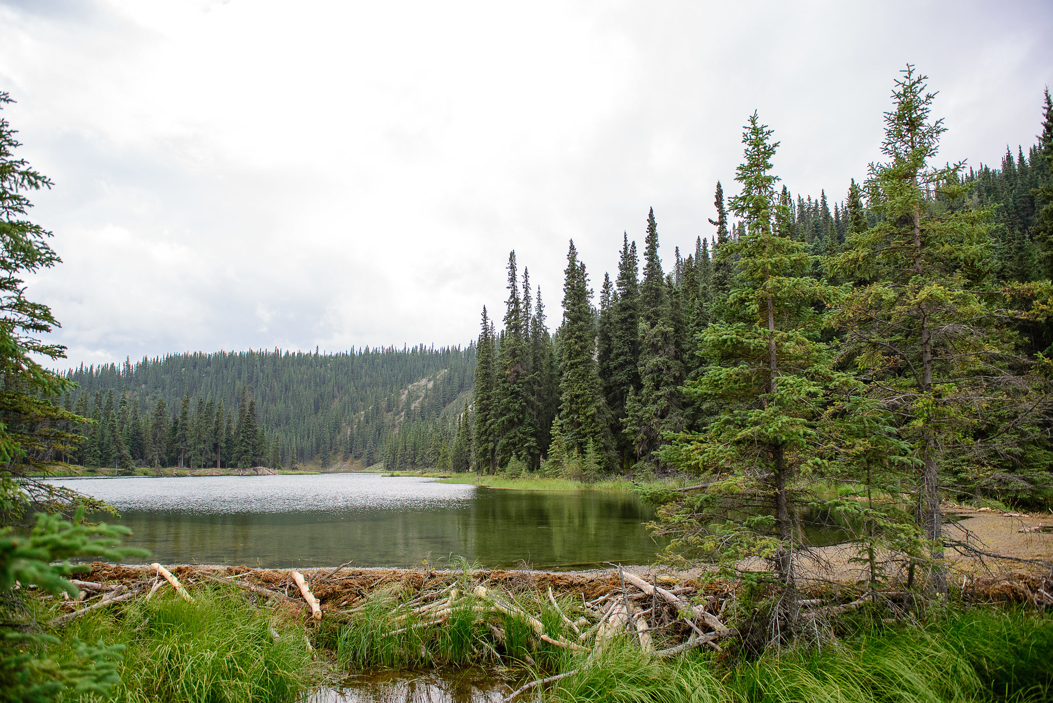 Hike Around Horseshoe Lake - Denali
