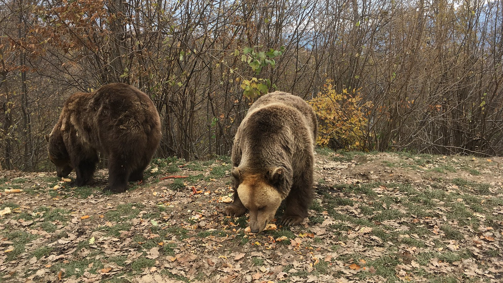 photo of LiBearty Bear Sanctuary