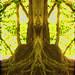 Baumspiegelung by Mara ~earth light~