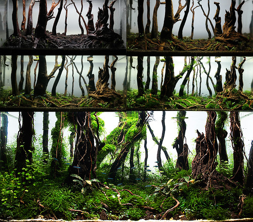 collage enchanted forest by nigel aquascaping | by nigel_kh