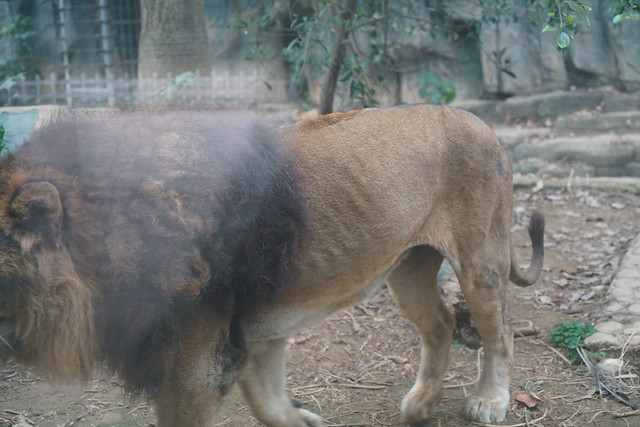 2018 CCA investigation into Nanning Zoo