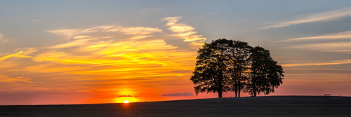 fivetrees tree sunset landscape panorama nature sun clouds