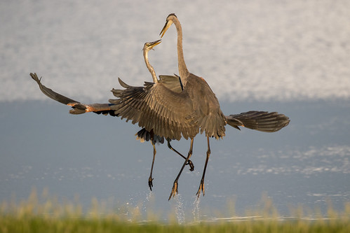 outdoor seaside shore sea sky water nature wildlife 7dm2 ocean canon florida bird takeoff jump