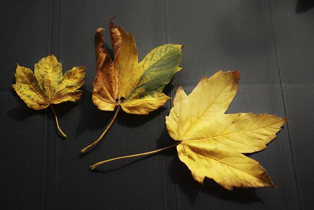 Herbstblattcollage gelb, grün, braun