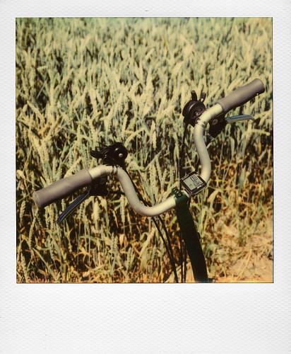 Dans les champs ...   by @necDOT