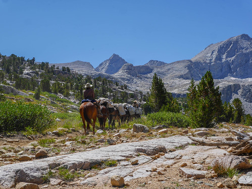 Pack train heading south on the JMT up to Forester | by snackronym