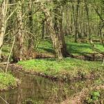 Der Kemperbach im NSG Thielenbruch und Thurner Wald